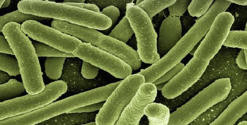 Bacterias vs. Plaguicidas