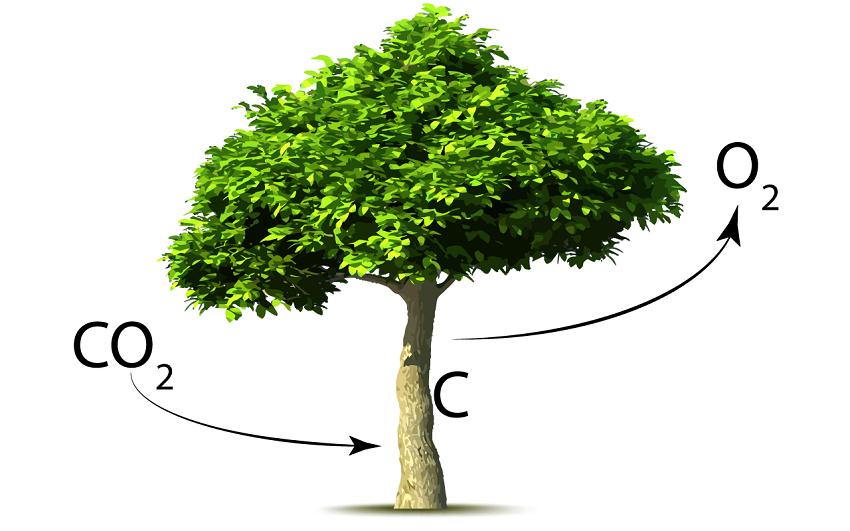 Tierras de Cultivo Podría Capturar CO2 y Proporcionar una Mayor Protección Contra Plagas y Enfermedades
