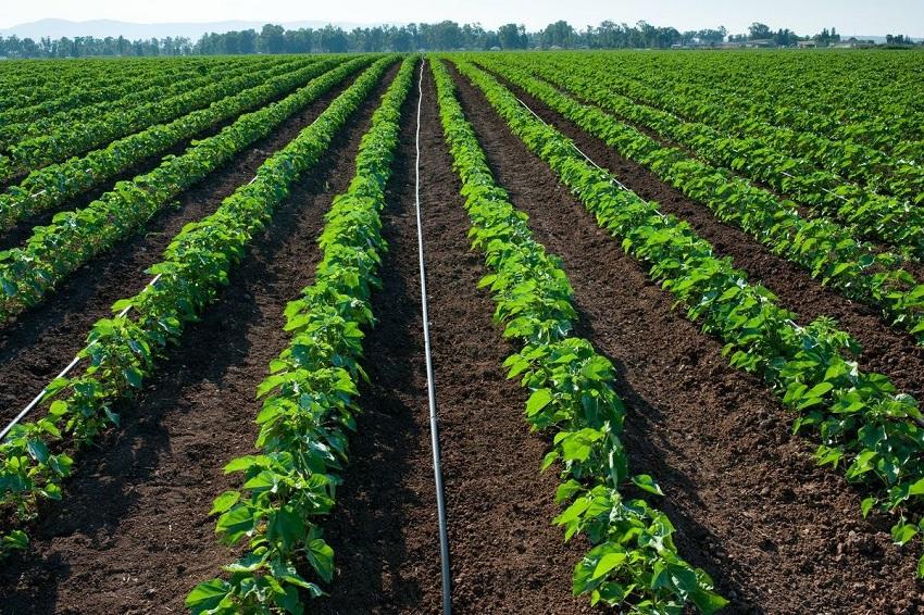 Argentina: Los Agrominerales Mejoran los Suelos y Elevan los Rindes
