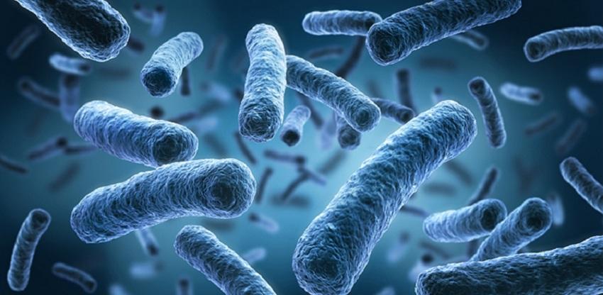 Investigadores Argentinos Ezxaminan Bacterias que Ayudan a Plantas para Combatir Hongos