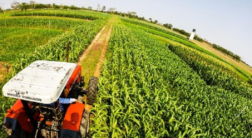 Bolivia Importa 11 Alimentos Transgénicos y Agricultores Exigen Aprobar Nuevos Cultivos