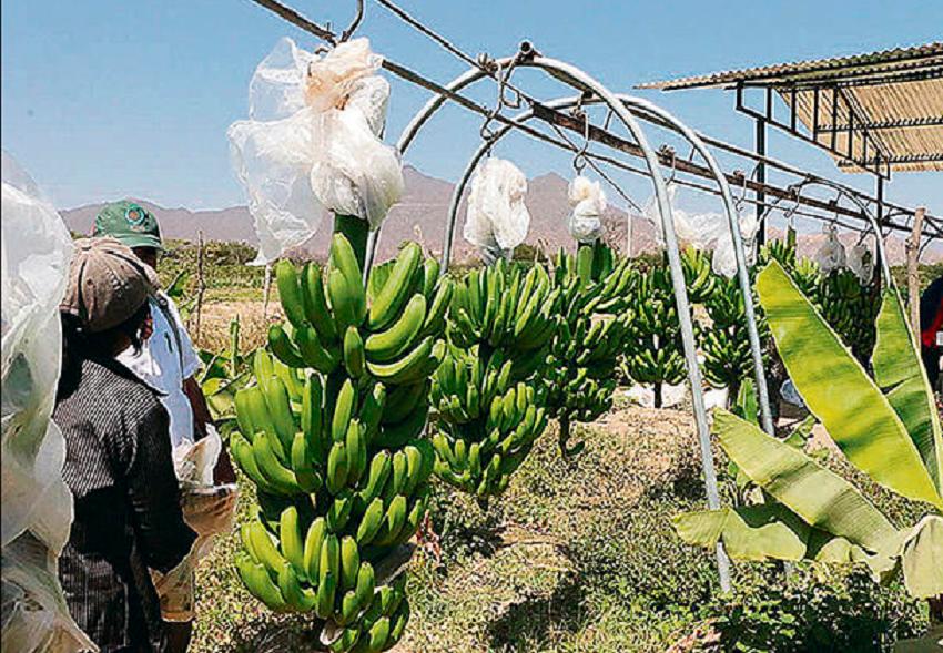 Chiclayo: En Dos Meses Estará Listo Estudio de Infraestructura Menor de Riego de Agua en Olmos a Varias Hectáreas