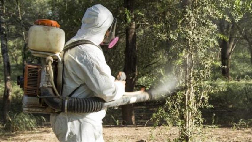 Perú: Senasa  Realiza Actividades para la Detección Temprana y Así Eliminar Foco de Insecto que Transmite HLB en Tumbes