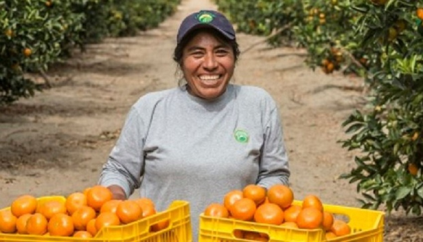 Empresa Peruana Camposol Adquiere Plantaciones de Mandarina en Uruguay