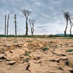 Minagri: Perú Tiene el Compromiso de Restaurar 3.2 Millones de Hectáreas Degradadas