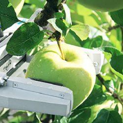 Expectativas Tecnológica , Robótica en la Agricultura Chilena