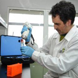Científicos Chilenos Desarrollan Frutillas Ricas en Antioxidantes y Tolerantes a Hongos