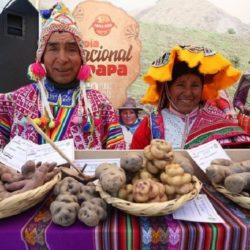 Cusco Celebra el Día Nacional de la Papa con Muestra de 300 Variedades de Este Tubérculo