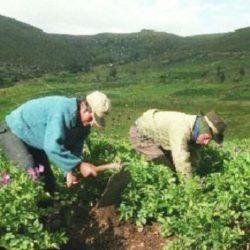 ONU: Economía Verde Podría Crear Millones de Empleos, Pero no Para los Agricultores