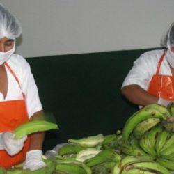 Perú: Ampliación de Ley 27360 Permitirá Combatir Informalidad, Desempleo y Pobreza