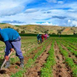 Perú Cuenta con 102 Proyectos para Impulsar su Agricultura pero se Busca Financiamiento