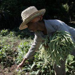 Se Necesita Agricultura Sostenible para Erradicar el Hambre