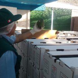 Moquegua: SENASA Certifica 15 Toneladas de Palta Fuerte para su Exportación a Chile