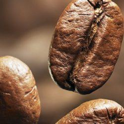 Cafetaleros de Amazonas Exportan Hacia Alemania