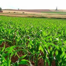 Nuevos Datos Sobre la Agricultura Temprana en América del Sur