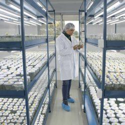 Chile Certifica Primera Exportación de Plantas de Arándanos con Destino a Colombia
