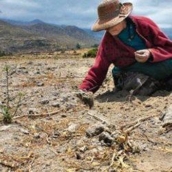 Perú no Utiliza ni el 10% de Terrenos Aptos para la Agricultura