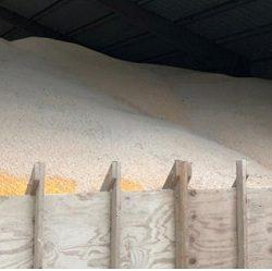 El Campo Padece la Guerra Comercial: Cultivos en EE.UU. se Pudren Mientras Costos de Almacenamiento Suben