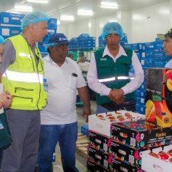 Perú se Alista para Iniciar Exportaciones de Mango a Chile