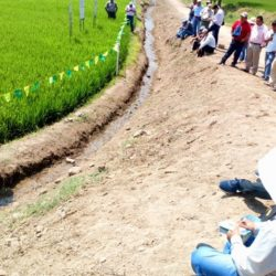 Arroceros de Lambayeque Conocen Nueves Tecnologías para Mejorar Calidad y Rentabilidad del Arroz