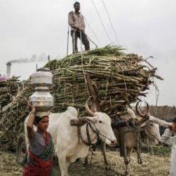India Desplazaría a Brasil como el Mayor Productor de Azúcar del Mundo