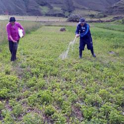 Perú - Agricultores Podrán Monitorear el Desarrollo de sus Cultivos