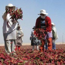 Chile, México y Perú impulsan Consejo Agropecuario de la Alianza del Pacífico