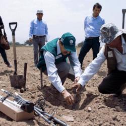 Proyecto 'Perú Smart Agro 4.0' Ayudará a Mejorar la Producción de Algodón en el País