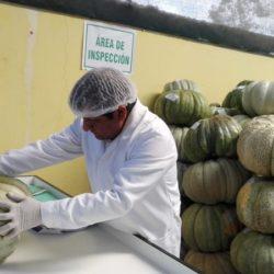 Tacna: Certificación de Ochenta Toneladas de Zapallo para su Exportación a Chile