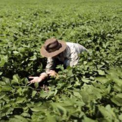 Perú - Abrir Mercados para la Agroindustria, El Reto para el 2019