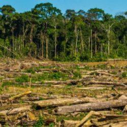 Minam: Perú invertirá US$ 60 millones en zona deforestada de la Amazonía