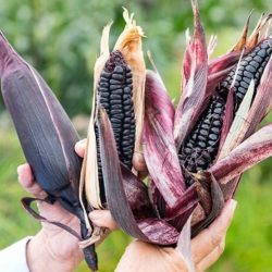 INIA Promueve Modelo Peruano para Incrementar Ingresos Económicos de Pequeños Productores Agrarios