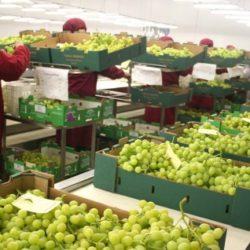 Perú y Chile unirán fuerza para promocionar agroexportación en Asia