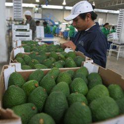 Exportación de Productos no Tradicionales creció 6.35% en enero