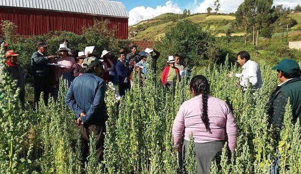 INIA Diseña Nueva Metodología de Capacitación Participativa con Productores de Quinua del Cusco