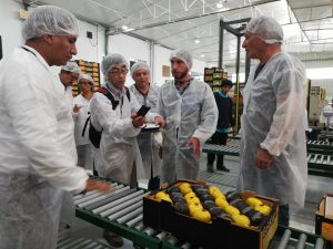 Más 600 mil kilos de Mandarinas Peruanas llegarán a Japón en 15 días