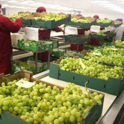 Perú es Electo como Primer País Invitado a Feria Hortofrutícola de Asia