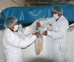Ayacucho: Tercer envío de Quinua se abre paso en mercado europeo