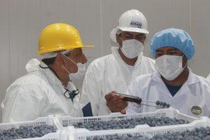 Moquegua: Senasa certifica primera planta procesadora de arándanos